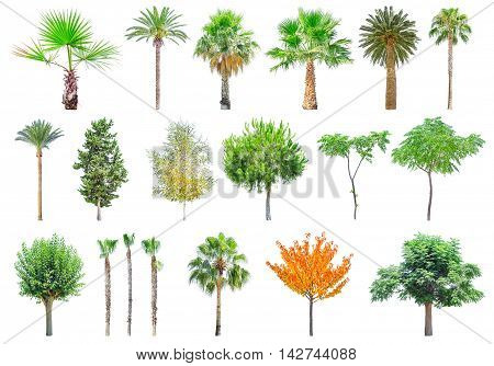 Set of different trees isolated on white background. File contains a clipping path.