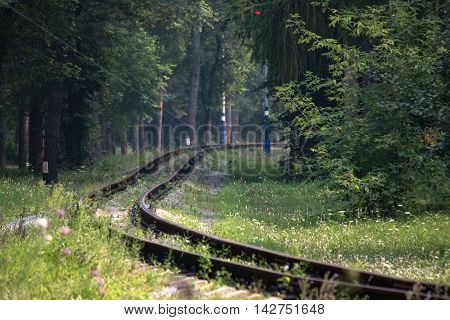the narrow gauge railway among of summer forest