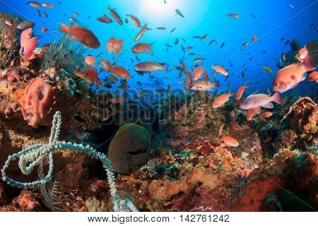 Coral reef and fish. Underwater ocean landscape. Giant Moray Eel