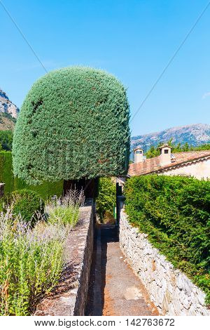 topiary tree in the mountain village Gourdon Provence France. Gourdon is listed under the most beautiful villages of France