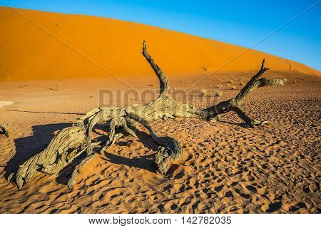 The bottom of dried lake Deadvlei, with dry trees. Ecotourism in Namib-Naukluft National Park, Namibia. Evening