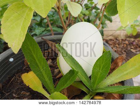 egg decoration or egg easter on the plant pot