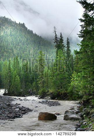 Mountain River. East Sayan River Shumak