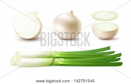 Vector Set of Fresh Whole and Sliced White Onion Bulbs with Green Onions Close up Isolated on White Background