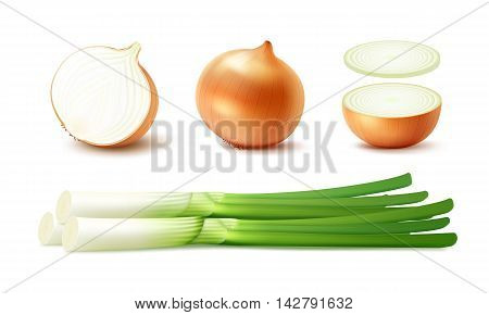 Vector Set of Fresh Whole and Sliced Yellow Onion Bulbs with Green Onions Close up Isolated on White Background