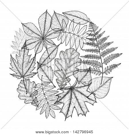 Circle of different leaves of trees. Hand drawing. Vector illustration