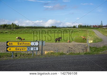Road signs showing directions to famous destinations in Iceland - Geysir and Selfoss. And icelandic horses on the background.