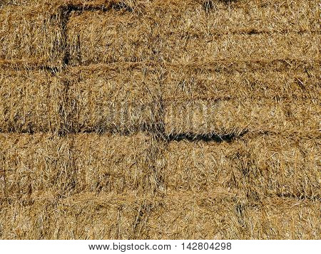 Bales Of Haystacks Stacked As A Wall Pattern. Summer Farm Scenery. Agriculture Background.