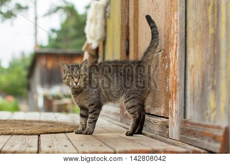 Cat on the porch of the farmhouse.
