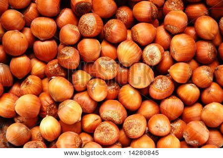 Hazel nuts arranged as the background