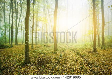 Green forest in sunny morning