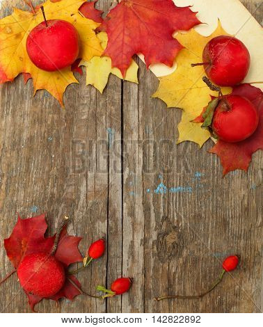 Border - red autumn apples rose hips and leaves on background