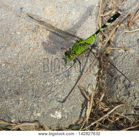 Green dragonfly that has landed on some bricks