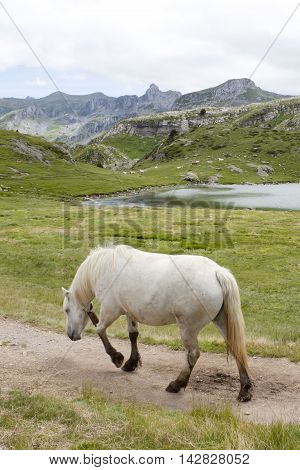 White Horse Walking With His Back Towards You, Near A Lake Between Mountains In France