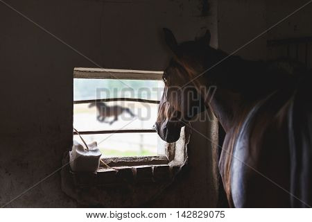 The horse looking out the window of the old stables