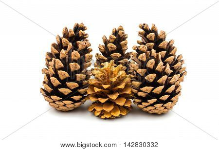 cones decorate  element on a white background