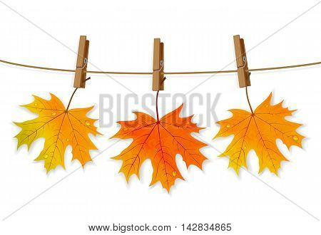 Set of orange maple leaves with water drops and clothespins on a rope, isolated on white background, illustration.