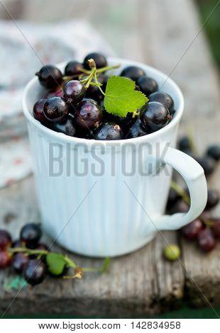 Freshly picked blackcurrants in a mug. Closeup. Food background