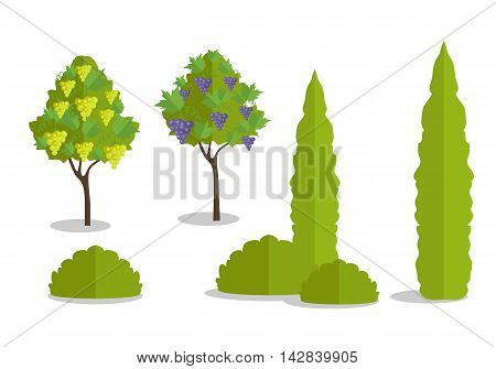 Set of isolated trees and bushes in flat. Tree forest, leaf tree isolated, tree branch nature green, plant eco branch tree, organic natural wood illustration. Vector illustration on white background.