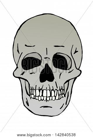 Skull head isolated image with white background