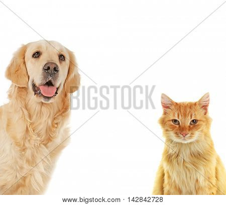 Cute dog and adorable cat on white background. Space for text.