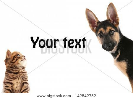 Cute puppy and adorable kitten on white background. Space for text.