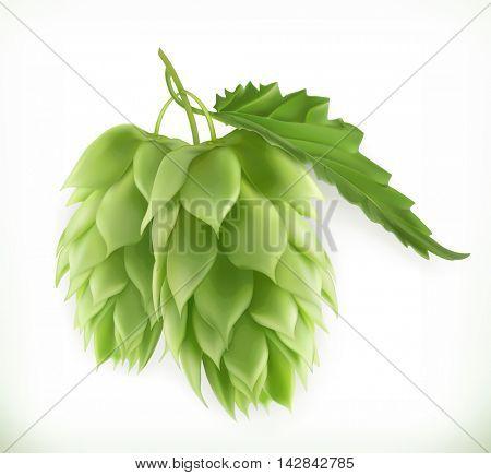 Hop plant 3d vector icon