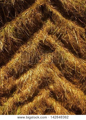 Tractor tire tracks in dry grass vertical