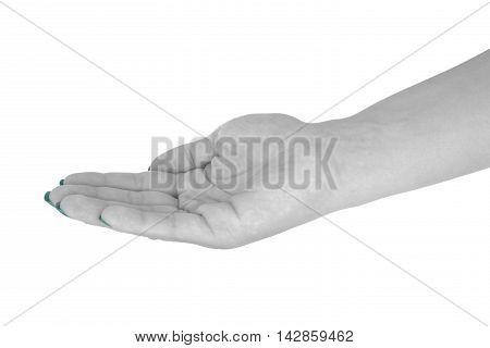 Palm up showing something, beautiful female's skin, cyan manicure. Isolated on white background.