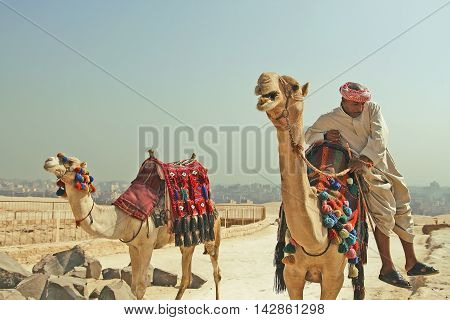Bedouin with camels in the desert. Giza. Egypt. September 2008.
