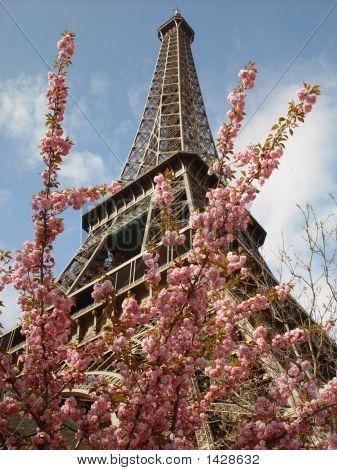 Eiffel Tower0405