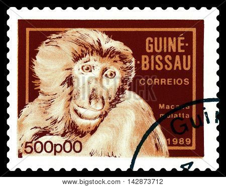 STAVROPOL RUSSIA - August 11 2016: A stamp printed by Guinea - Bissau shows Caudata macaque circa 1989.