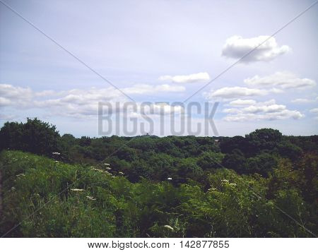 Treetops with Penshaw Monument in the Distance from Washington near Sunderland