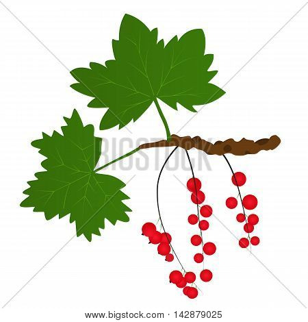 Branch of red currants with leaves. Bright juicy and tasty berry. Healthy raw food. Vector illustration. Isolated on white background.