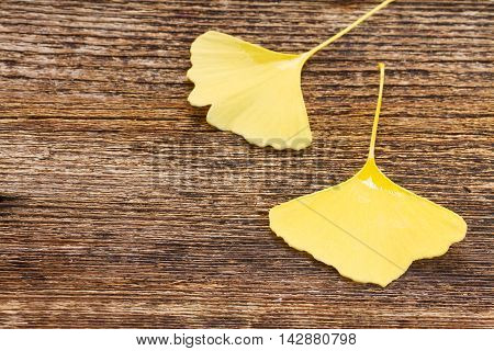 Fall yellow leaves of ginkgo biloba on wooden background with copy space