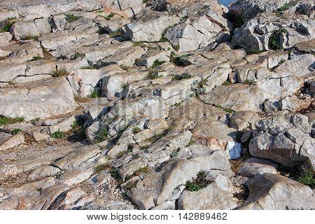 wild white stones and green grass on the wild stony ground
