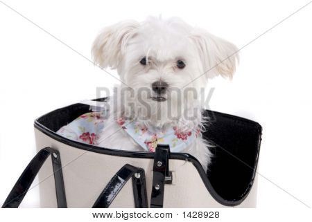 Puppy_Carrier