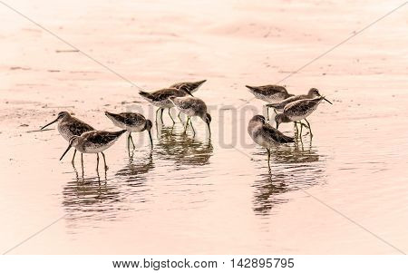 This is a group of sandpipers congregating near the surf.  A black and white sepia filter was been added in LR.
