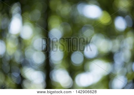 Bokeh Background In Forrest