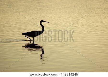 bird wading in water reflection serene calm dusk