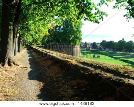 The Walls Of Lucca With Plane Trees