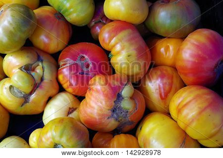 Colorful heirloom tomatoes arrangement seen from above