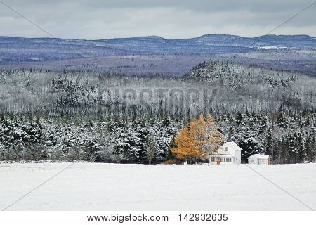 Tree with orange leaves and snow in the mountain during winter in Canada