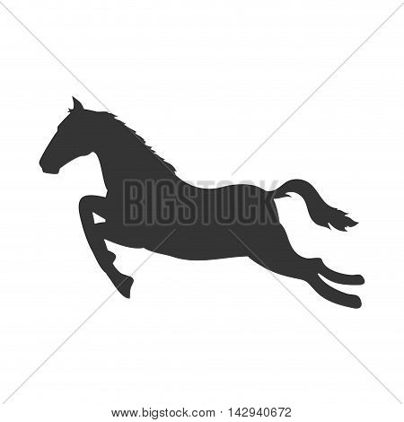 horse ride animal jump fast jockey mammal vector illustration isolated