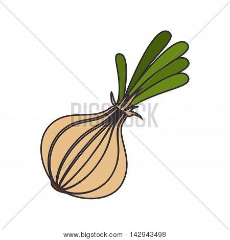 garlic aliment natural vegetable food ingredient organic vector illustration isolated
