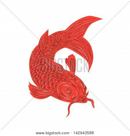 Drawing sketch style illustration of a red koi nishikigoi trout fish set on isolated white background.