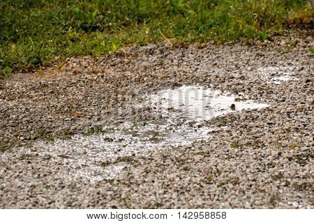 Puddle Of Water And Raindrops