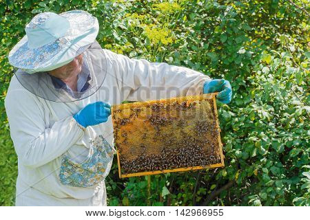 beekeeper holding a honeycomb full of bees. Beekeeper man working with a frame full of bees. Beekeeper keeps frame with honeycomb. Beekeeper in protective workwear inspecting honeycomb frame at apiary