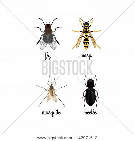 Colorful insects vector set with names isolated on white