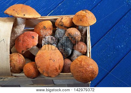 Aspen mushrooms in basket on blue wooden table close up